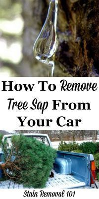 best 20 remove tree sap ideas on pinterest car cleaning tips auto detailing and diy glass. Black Bedroom Furniture Sets. Home Design Ideas