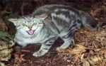 Wilde katten groot probleem Bungalowpark Zuiderzee Medemblik