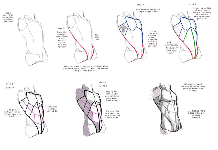 160 best Anatomy for artists: Back and Chest images on