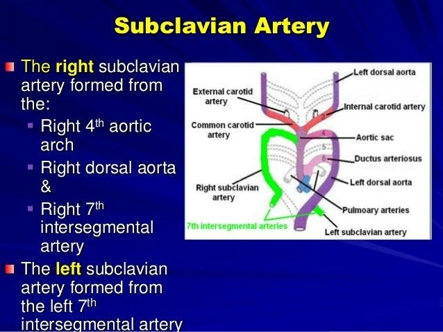 Rt. Subclavian artery from 4th Rt. Aortic arch 【 Arch of Aorta from - 4th Lt. Aortic arch 】 .... Note: D/T obliteration of Rt. 4th Aortic arch, Instead of being the first branch , it arises on its own as the fourth branch, after the left subclavian artery - This condition is called Aberrant right subclavian arteries (ARSA), also known as arteria lusoria & is the commonest of the aortic arch anomalies ...