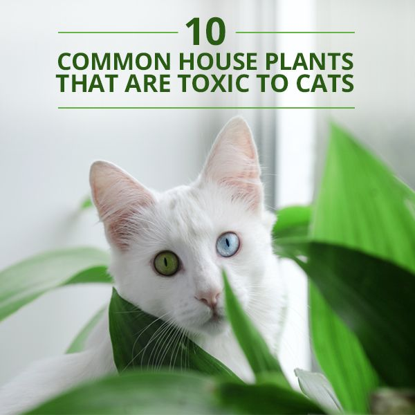 10 Common House Plants That Are Toxic to Cats #cathealth #toxicplants