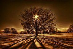Dessiner son arbre de vie symbolique est une expérience personnelle que chacun peut entreprendre puis en ressentir les bienfaits.