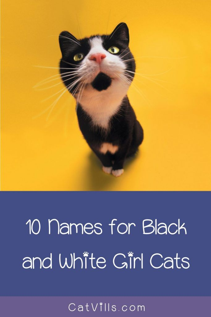 62 Darling Black And White Cat Names Catvills In 2020 Cute Cat Names Black And White Kittens Cat Names