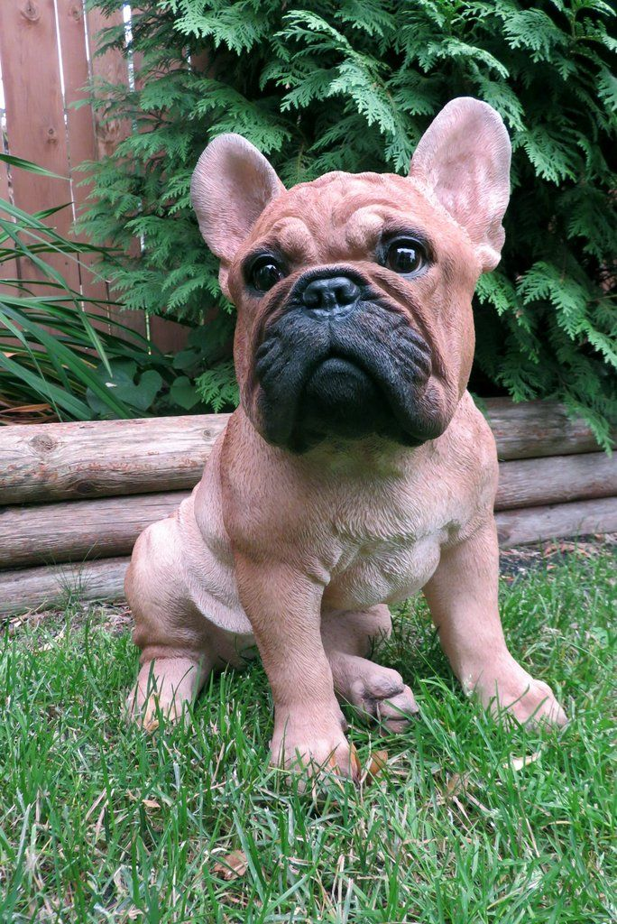 French Bulldog Dog Sitting Statue Golden Brown French Bulldog