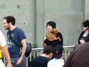 frank iero carrying dog number 4,387