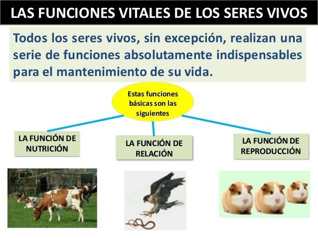 Resultado De Imagen De Funciones Vitales De Los Seres Vivos Seres Vivos Funciones De Nutricion Comprensión Lectora