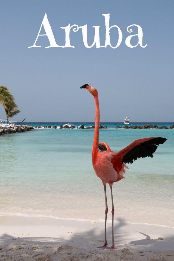 Aruba Mit Mr Flamingo auf der einsamen
