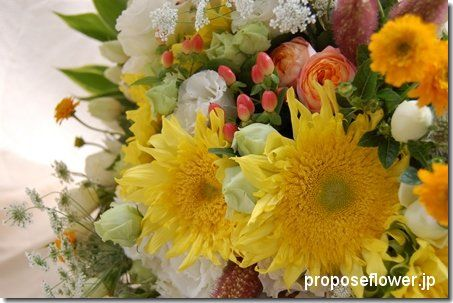 Sunflower 向日葵