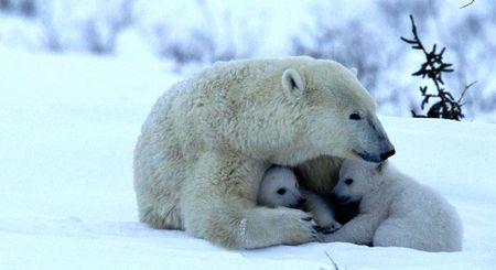 Powerful love.  Via animals.desktopnexus.com