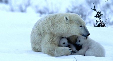 Powerful love.  Via animals.desktopnexus.com