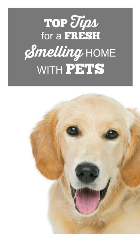 TOP TIPS FOR A FRESH SMELLING HOME WITH PETS | eBay