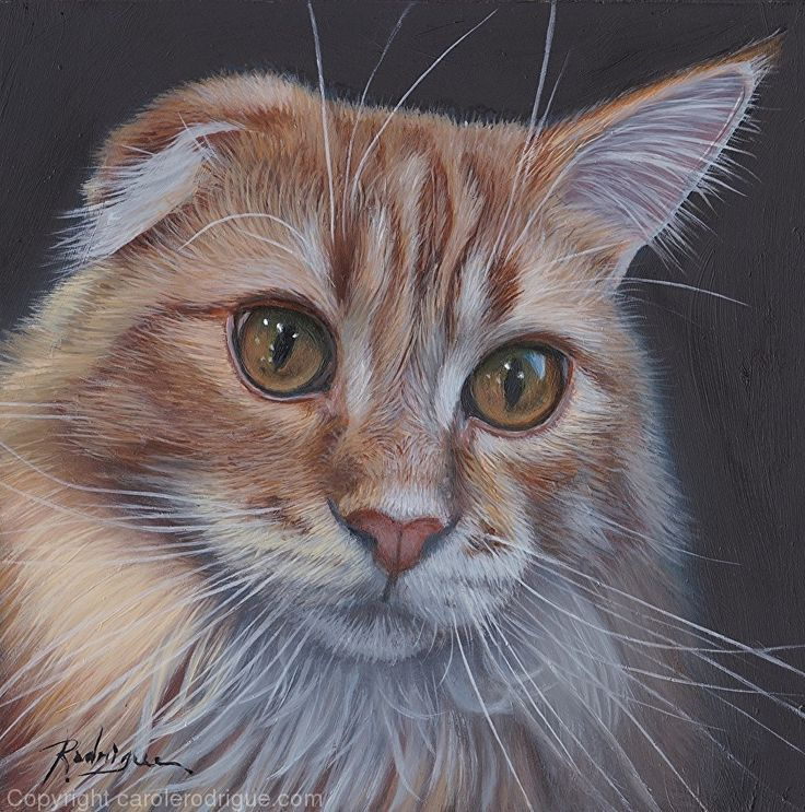 Baxter, Maine Coon by Carole Rodrigue Oil ~ 6 x 6