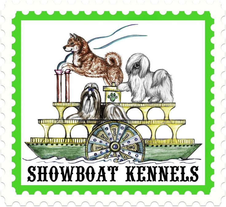 Coton de tulear, Coton de tulear puppies for sale - Shiba Inu Puppies for Sale , Coton de tulear puppies for sale Showboat Kennels