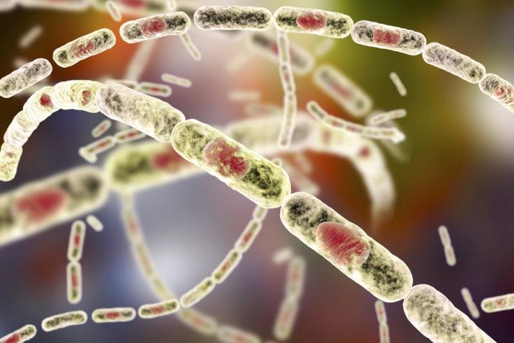 Debunked! 80-year-old 'viable' anthrax strain turns out to be much younger. An international team of researchers figured it out by using advanced genomic sequencing.