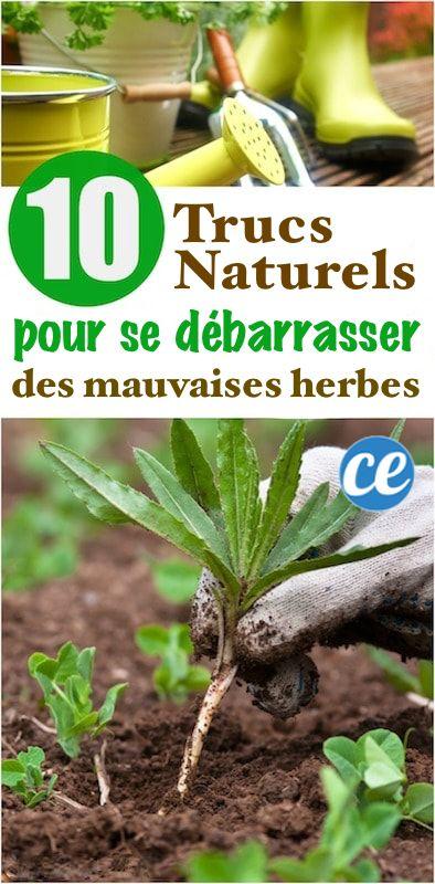 448 best plantes et jardinage images on pinterest