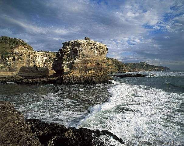 Neuseeland Nordinsel Muriwai Tölpelkolonie, Kliff, Tölpel
