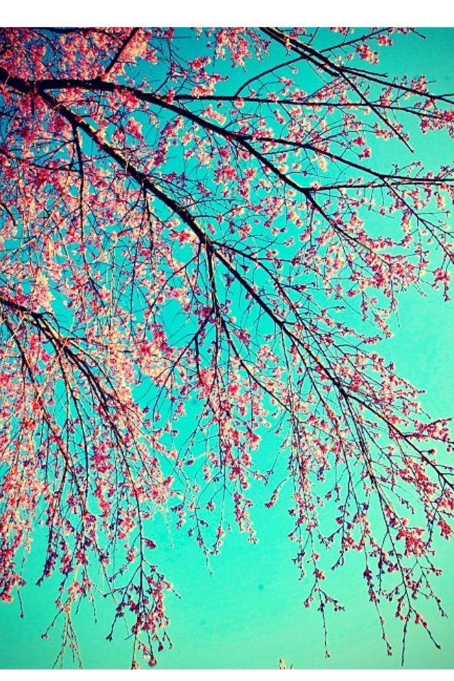 Pin By Pamela Carrion On Raine Miller Books Cherry Blossom Blossom Cherry Blossom Tree
