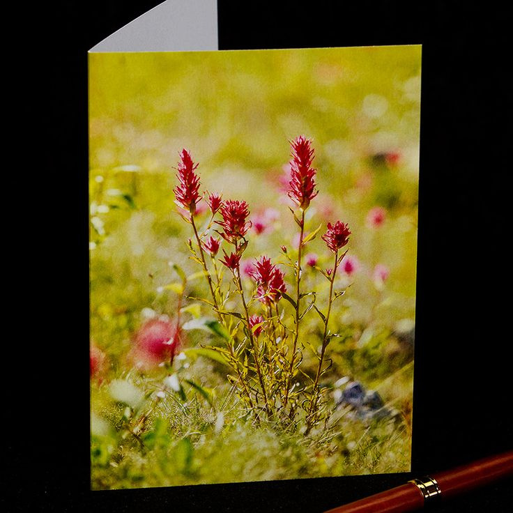 """""""Every flower is a soul blossoming in nature."""" ~Gerard de Nerval. Purchase this and other quality photo greeting cards here: https://www.etsy.com/ca/shop/TanyaDeLeeuwPhoto?page=1#save Please like and repin! Thank you!"""