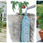 Daca iti doresti o gradina minunata, iata 11 idei practice in articolul de astazi de a planta florile sub forma de cascade curgatoare