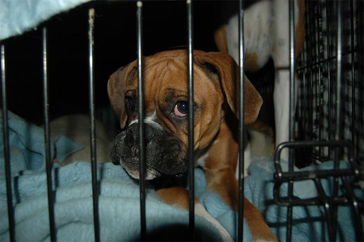 Puppy crates, dog cages, or dog crates as they are sometimes called, are an essential aid to dog training. Find cheap dog crates to suit all budgets.