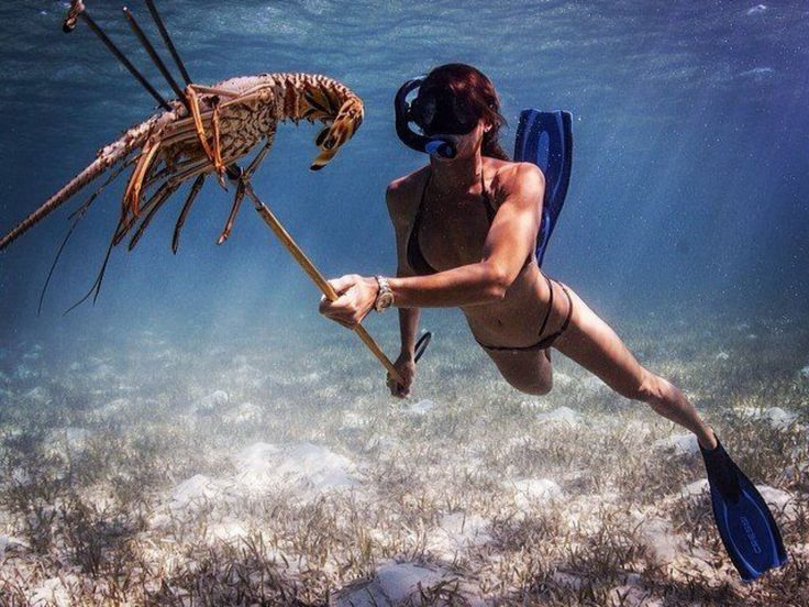 Let's go spear fishing in the bahamas