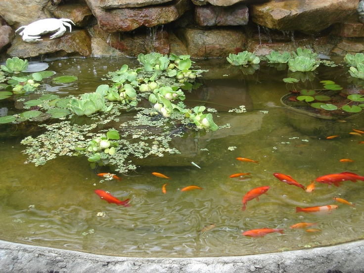 25 beautiful koi fish pond ideas on pinterest pond for How much are koi fish worth