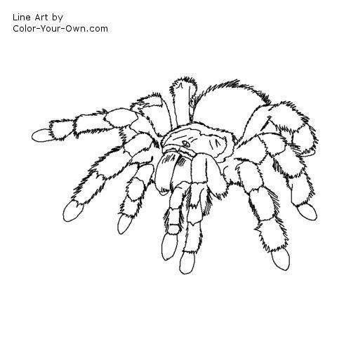 91 besten spider bilder auf insekten spinnen