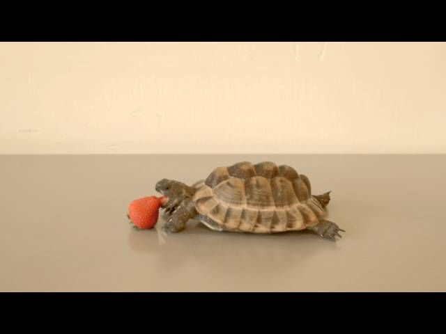 By watching a strawberry-eating Tortoise and listening to Snape's epic voice you have already donated to Save the Children and Refugee Council