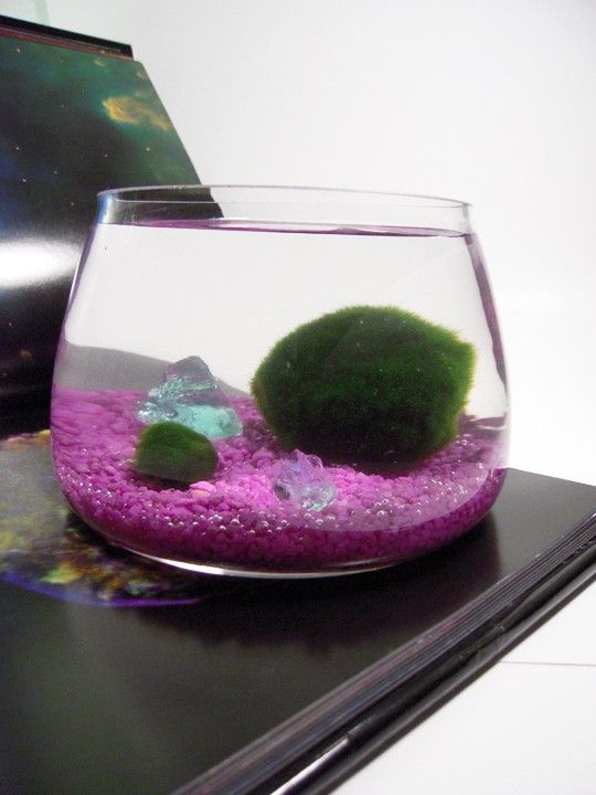 577 best images about for Betta fish moss ball