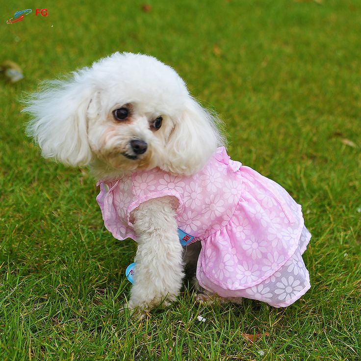 New Arrival Dog Summer Clothes Romantic Cherry Style Dog Dress Princess Puppy Pet Skirt Costume // FREE Shipping //     Get it here ---> https://thepetscastle.com/new-arrival-dog-summer-clothes-romantic-cherry-style-dog-dress-princess-puppy-pet-skirt-costume/    #catoftheday #kittens #ilovemycat #lovedogs #pup
