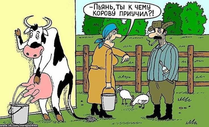 Доим корову смешные картинки