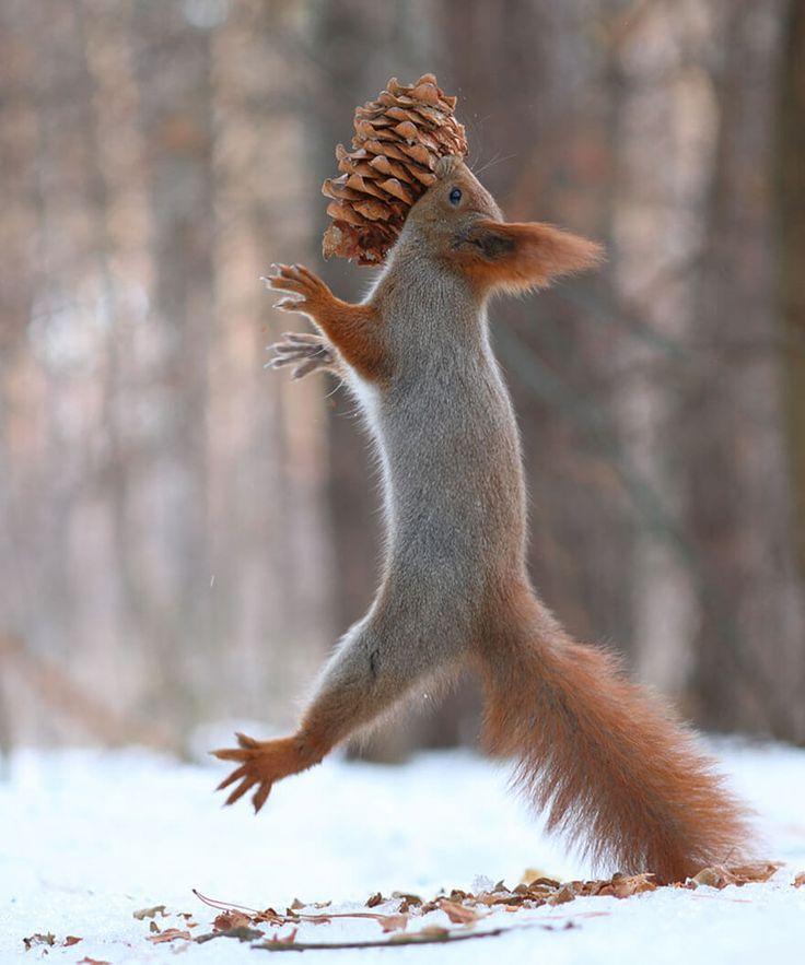 Photos Vadim Trunov, écureuils, neige