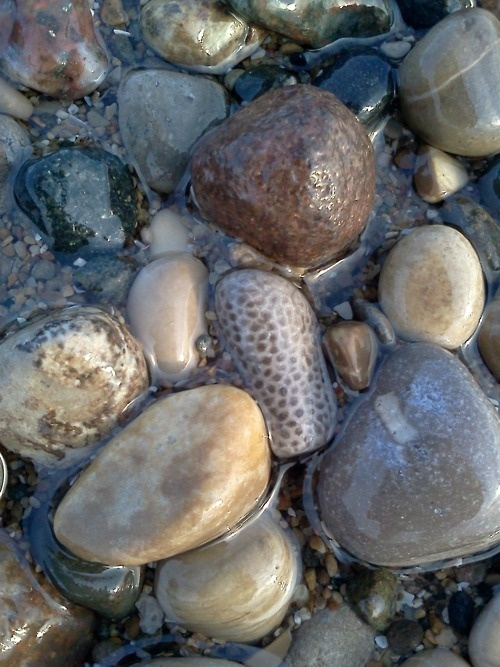 River Rock With Clear Coat As Wall Decor Would Look