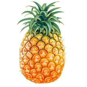 Dibujos infantiles de frutas: Piña