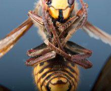 The Cocktail Made from Japanese Hornets and 6 Other Boozy Trends