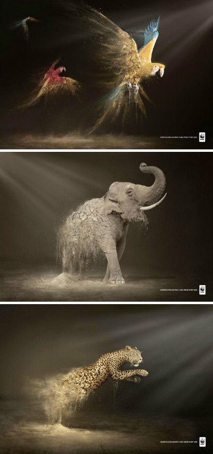 WWF advertising campaign where they released a series of images of endangered animals fading away into dust. This is a really nice graphical piece using a nice visual tool/metaphor. But it doesn't strike hard enough, it doesn't make me think any deeper ab