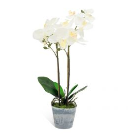 White Orchid Plant -500mm