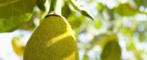 How to Cook Jackfruit | LIVESTRONG.COM