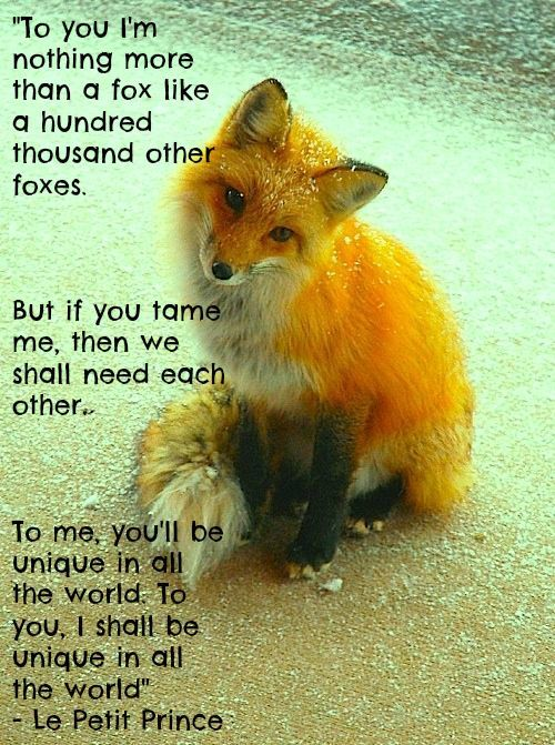 little prince fox quote - Google Search