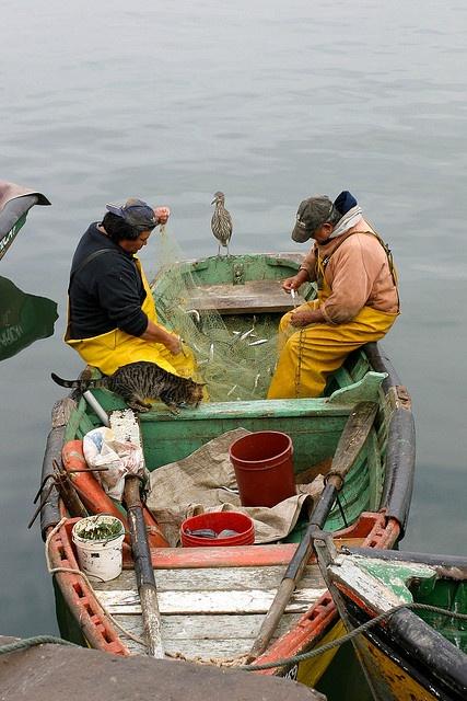 fishermen, Arica, Chile. Photo: hubertguyon, via Flickr
