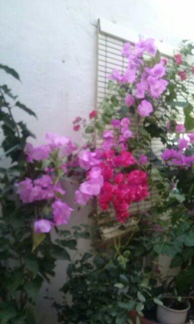 En octubre casi noviembre y floreciendo como en primavera ¡esto es Murcia!