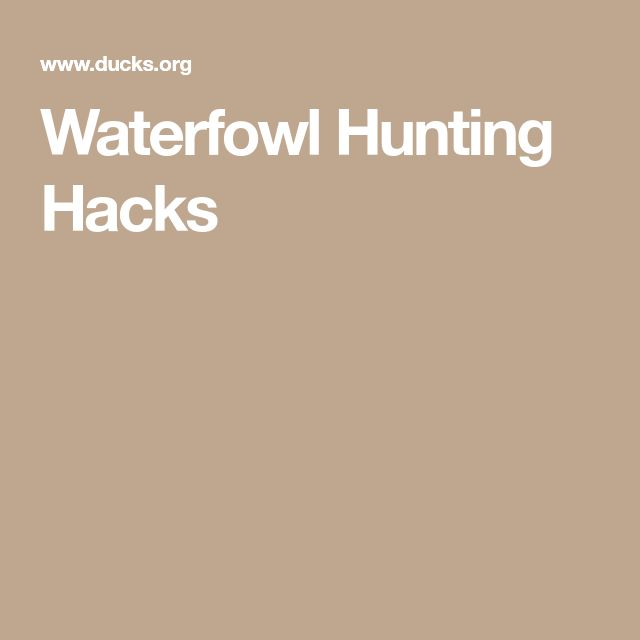 25 unique waterfowl hunting ideas on pinterest duck hunting season duck identification and for Wisconsin exterior goose season