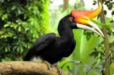 Парк птиц. В парке есть водопад, для гостей проводят шоу птиц. Яркие попугаи, птицы-носороги, орлы, совы. Можно покормить птиц, и сделать фотосессию!