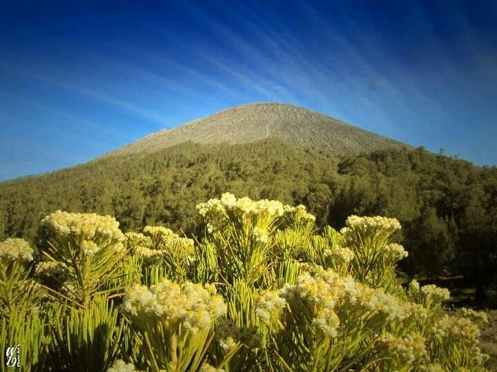 Kalimati - Mount Semeru - East Java - Indonesia