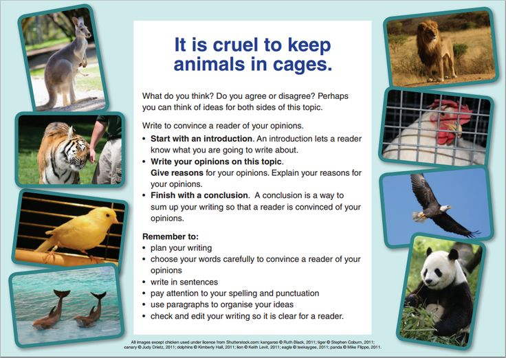 short essay on cruelty to animals Animal cruelty