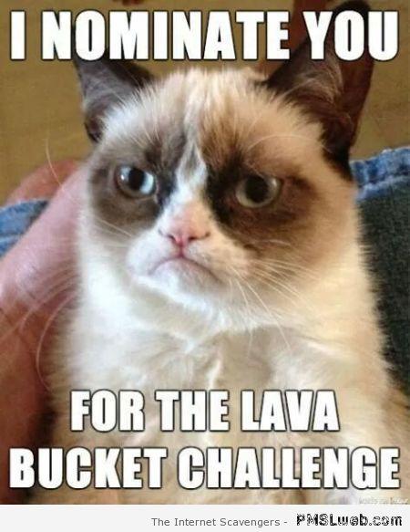 35 Funny Grumpy Cat Memes