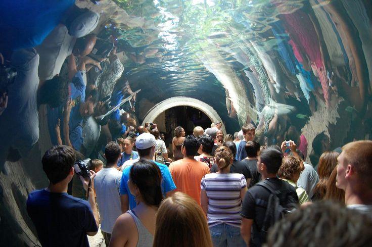Texas Tourist Attractions | Top Tourist Attractions In Dallas - Thermo Rocks