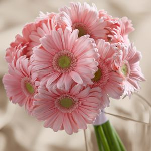 Daisies are my favorite flowers. I like these, but I don't know what color I would do to go with the pink.