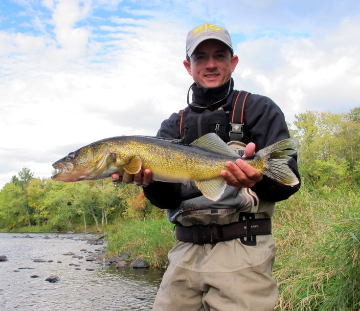 43 best images about walleye on pinterest for Walleye fishing lures