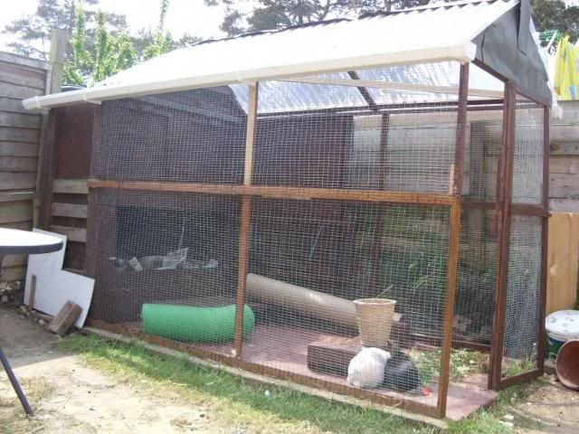 Aviary Roof Rabbits United Forum Aviary Rabbit Enclosure Bird House Kits